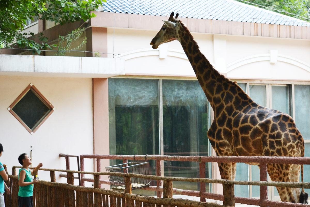[原创]郑州市动物园印象(多图)