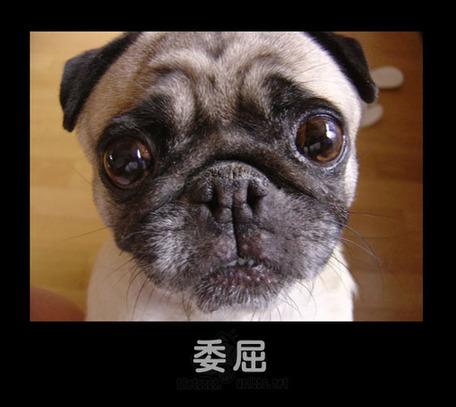 主题: 搞笑的动物表情
