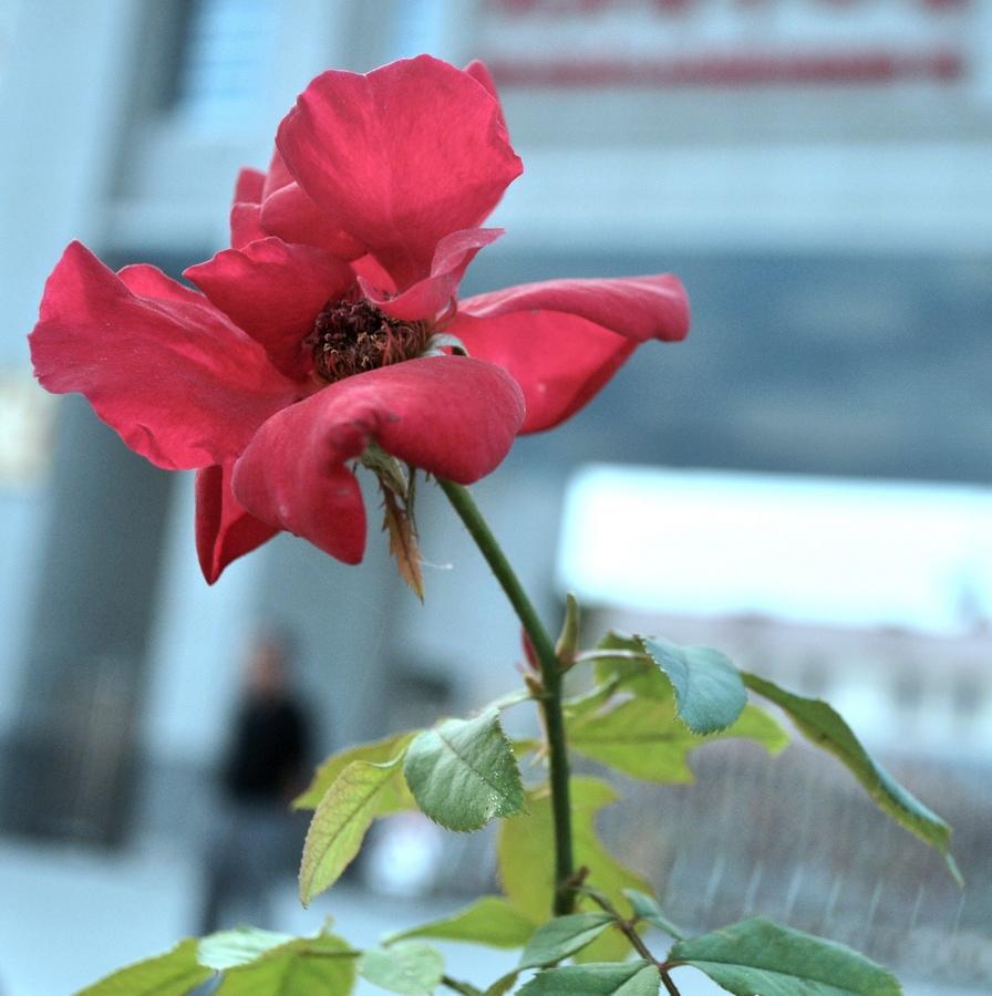 [原创]八月中秋拍鲜花