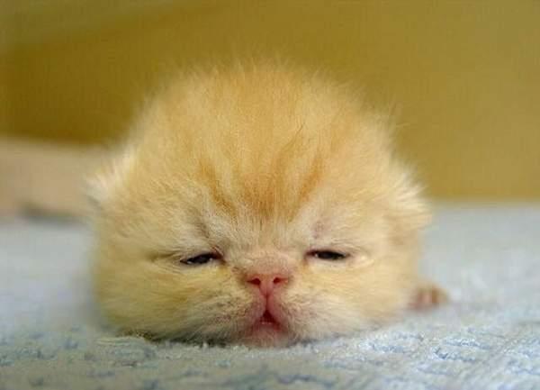 关于动物的冷笑话_关于动物的冷笑话日式冷笑话旁白系列