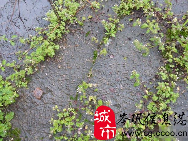 cg城池_【已修复】超大型古代城池一座庞大场景may