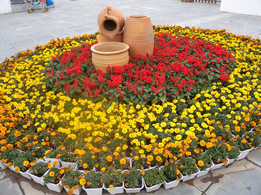山 茶 迎春(一) 深圳地处祖国的南方,南方气候较之北方温暖的多。因此,更适宜农作物的生长和栽种各种花卉。深圳各大公园根据市里统一安排部署,各个公园栽种的花卉品种也不同,如去年我曾经介绍过人民公园的月季展,洪湖公园的荷花展,而深圳国际园林花卉博览园,简称为园博园,根据分工主要栽种山茶花。今年新春佳节期间,园博园举办了第六届山茶花展览,参展的山茶花有150多个品种,1500多株,有红色的、白色的、黄色的、粉色的、红白相间、红黄相间的山茶花,竞相开放,争奇斗艳,美不胜收。这些婀娜多姿美丽的山茶花吸引广大市民前