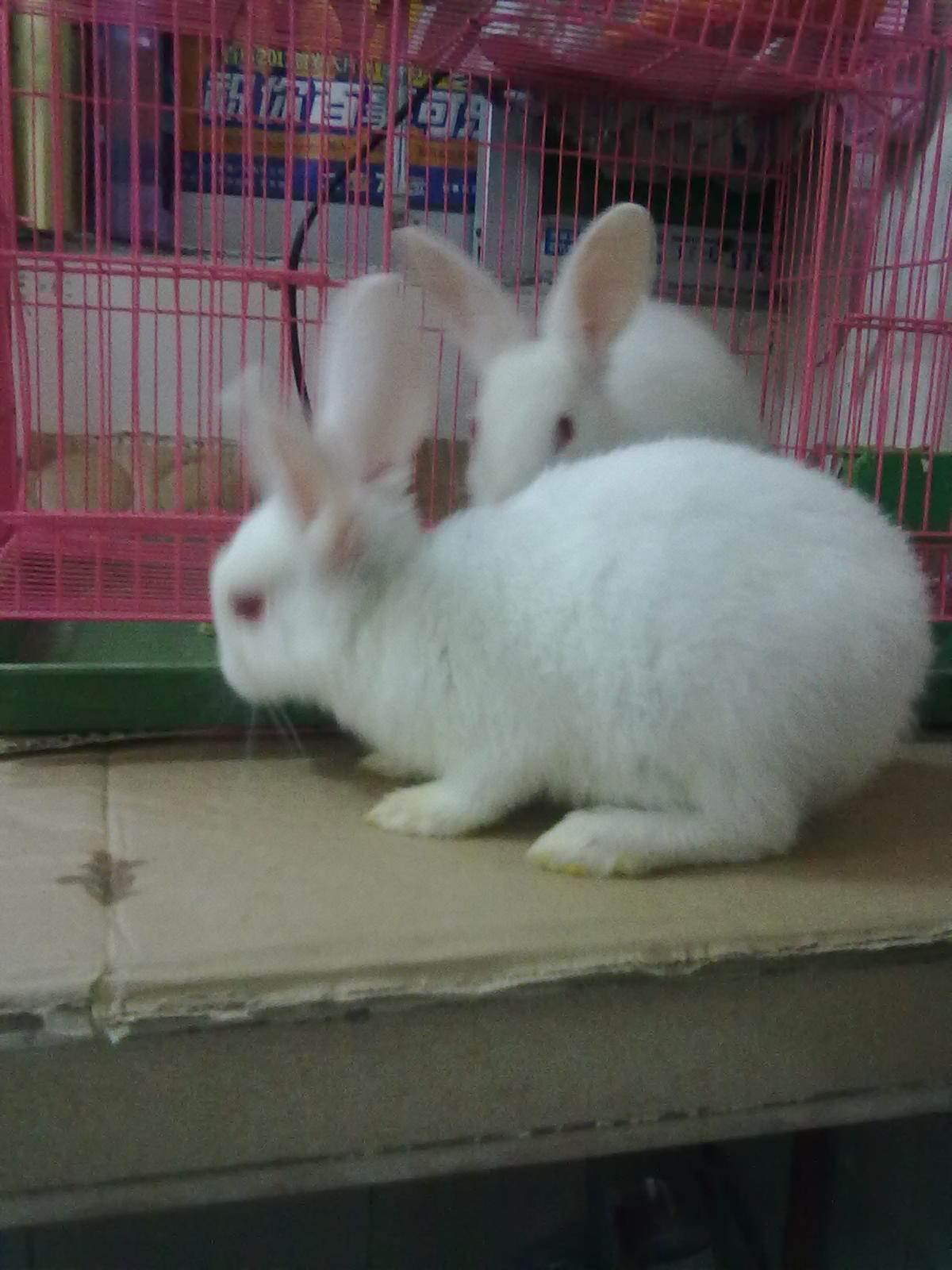 [原创]看看我养的小白兔长大没有~~~~