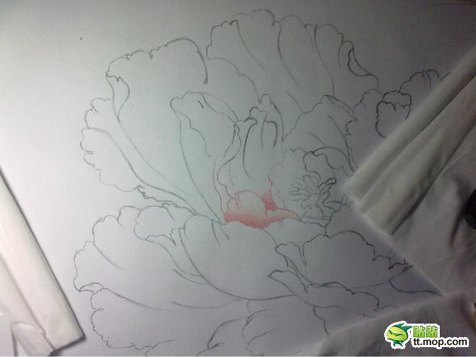 简单牡丹铅笔画上色