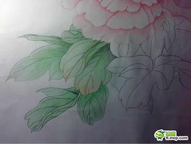 牡丹花图片彩铅笔画