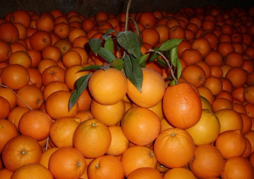 我家脐橙怎么办,_三农·户改
