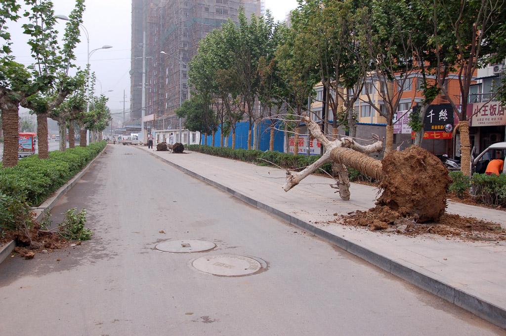 明光西路植树忙_围观滁州