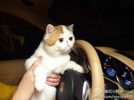 加菲猫红小胖snoopy