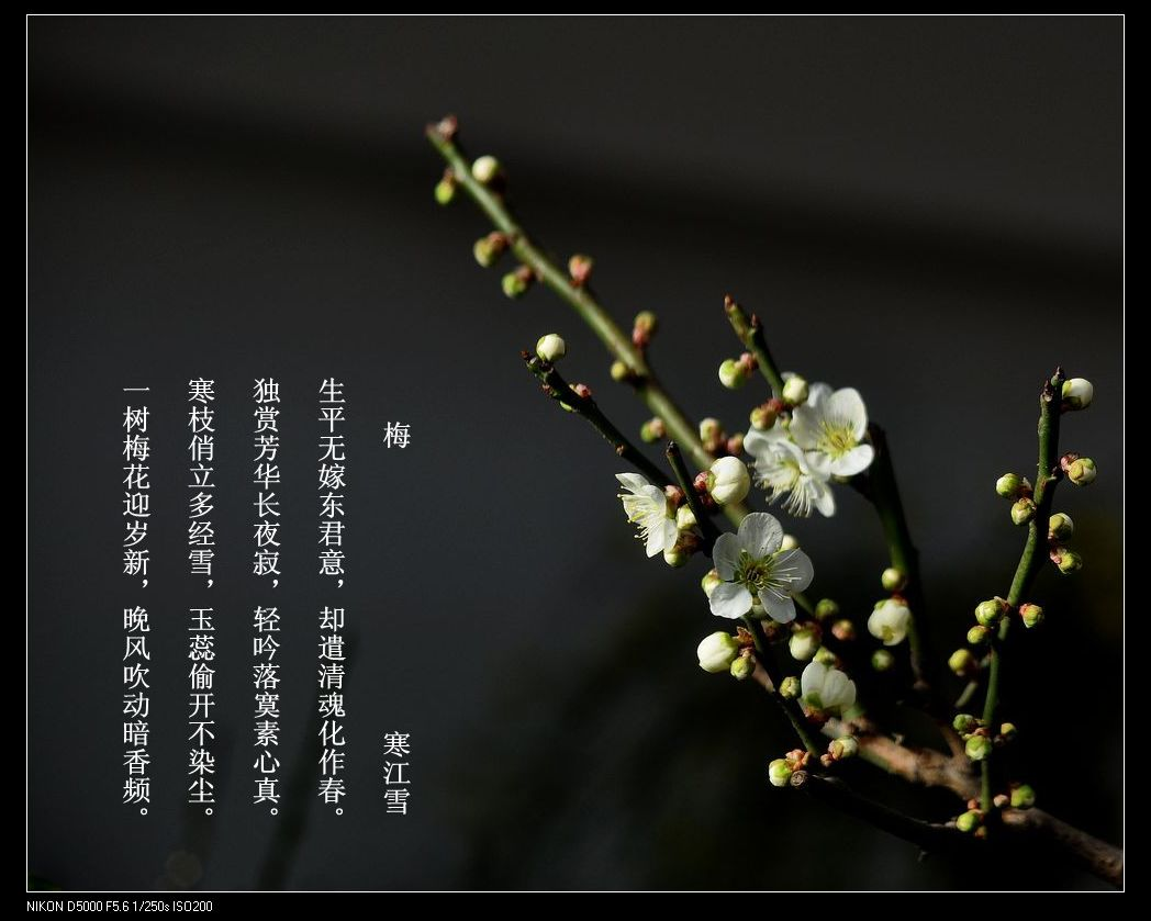 彩铅梅花树加文字
