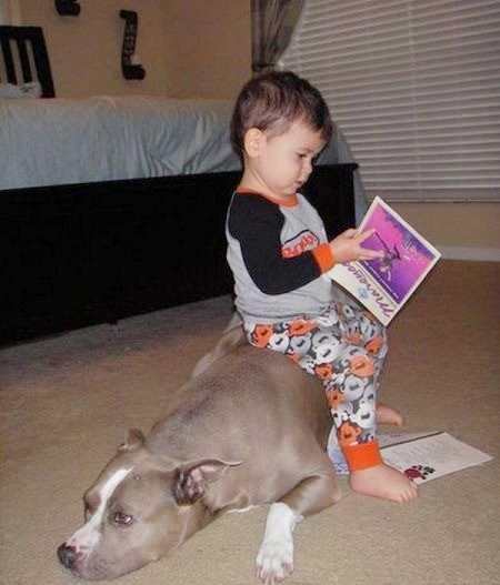小孩纸和动物的搞笑图片
