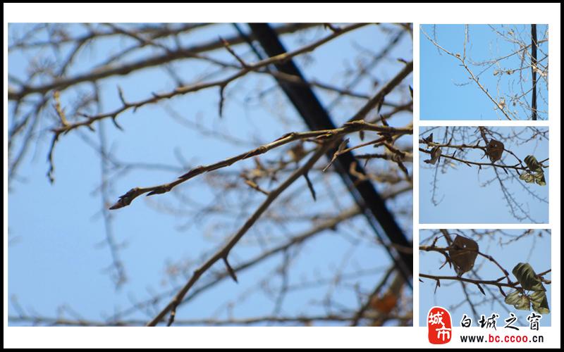 春天来了 小树发芽了 人像花鸟
