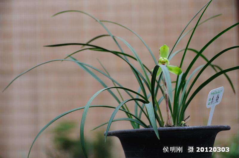 阳台种的兰花图