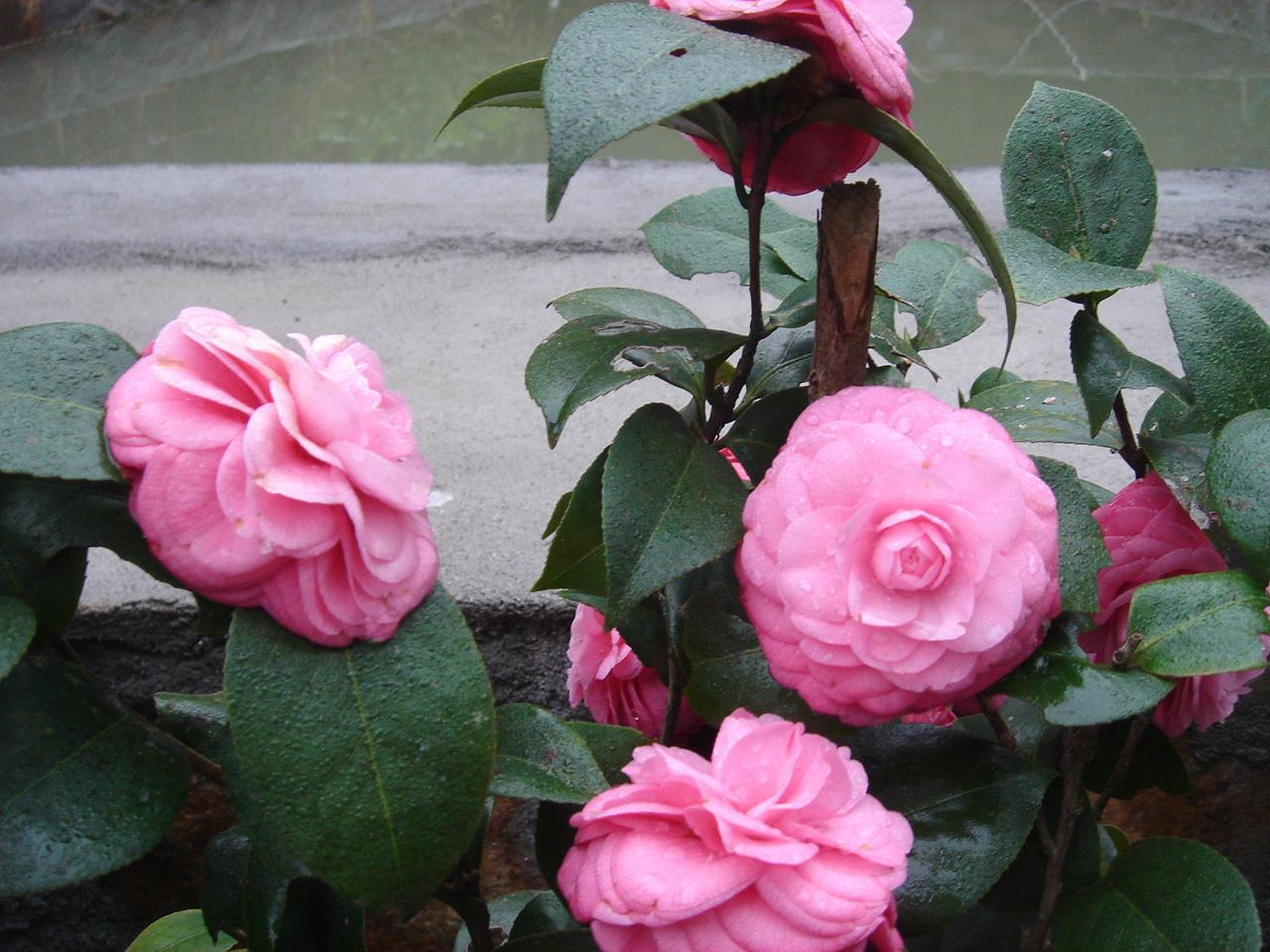 描写春天的花的诗-描写春天的花的古诗