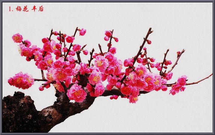 中国十大名花欣赏