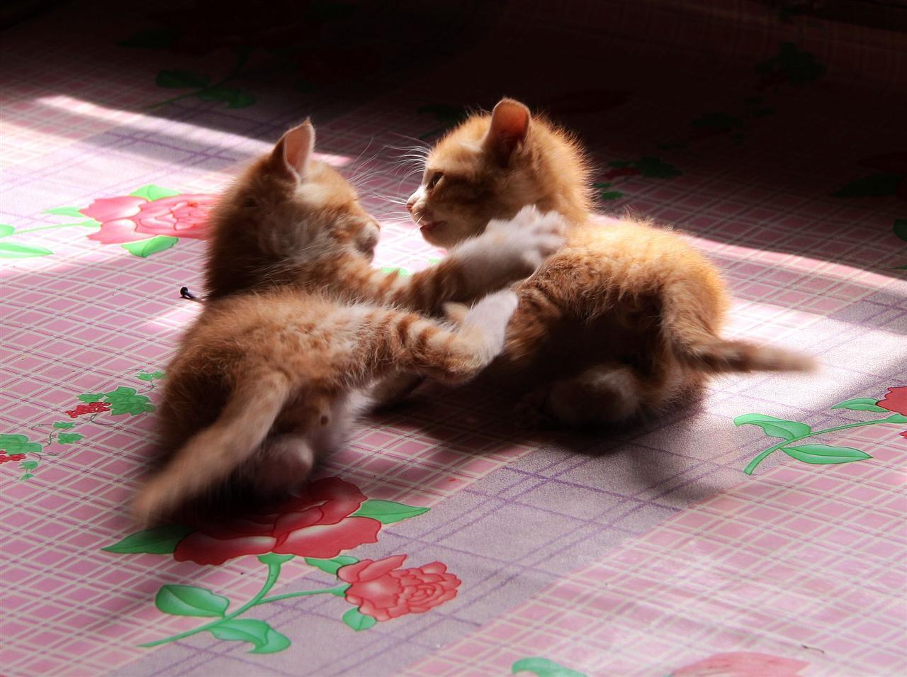 可爱的猫咪配文字图片
