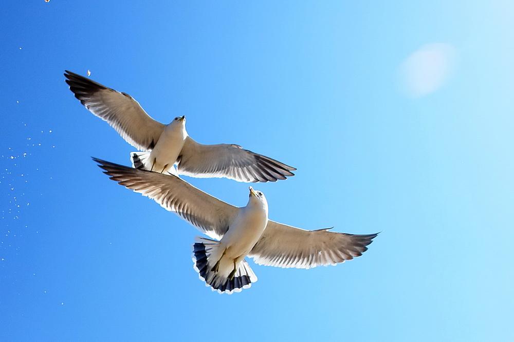 动物 鸟 鸟类 1000