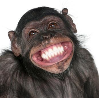 动物开心龇牙笑
