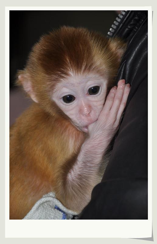 [原创]宠物 [袖珍猴]_影协会员交流区