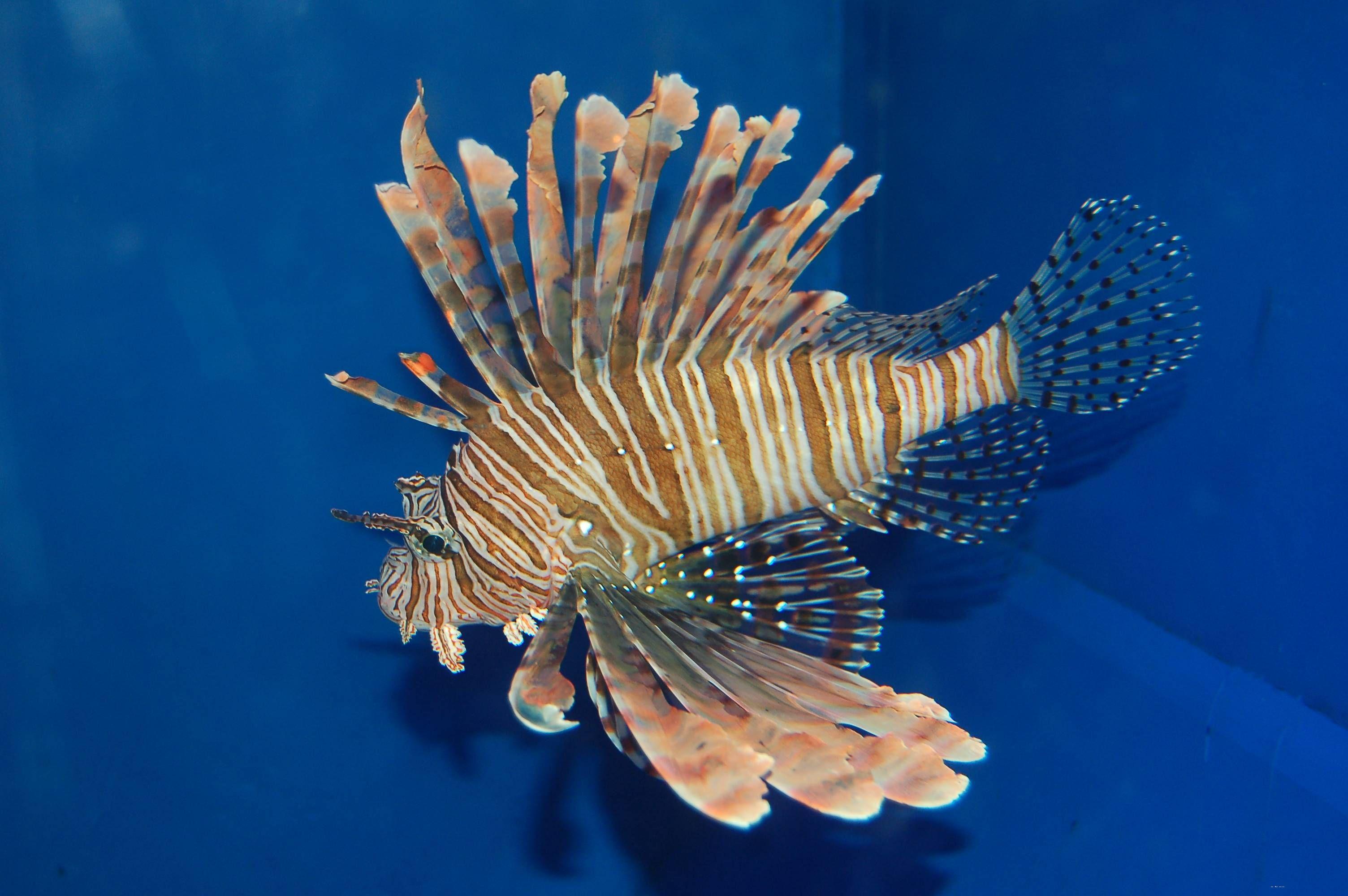 魅力无限的海底世界!