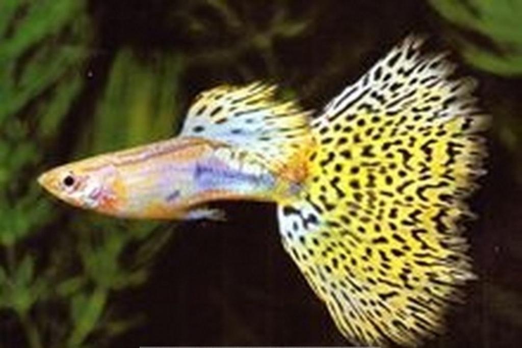 壁纸 动物 鱼 鱼类 1024_684