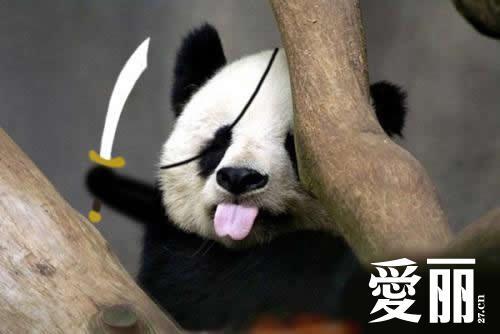 搞笑ps大熊猫