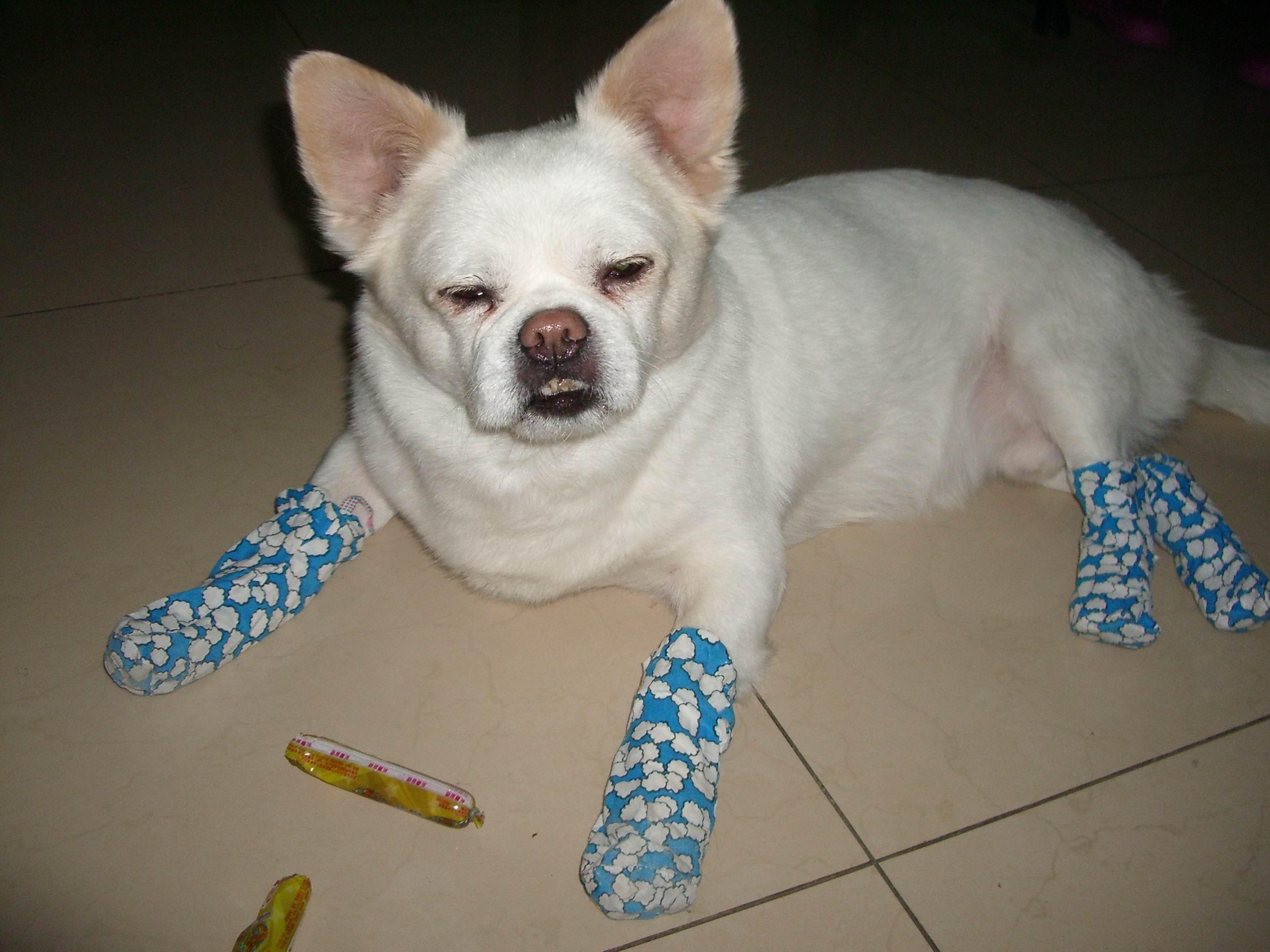 一条白色的宠物小公狗(狐狸犬)于2011年2月21日在白城吉鹤院及保胜乡附近丢失,名为雪儿。 特征:白色短毛、两只耳朵及尾根部毛发黄、平嘴巴、紧张或生气还有听声音时两只耳朵竖立。年龄13年,重约23斤,高约40公分,身长约65公分。 这条狗如同我们家庭成员一样重要,望有好心人看到或拾到请与本人联系,重金酬谢(至少1000元)。 联系电话13578735325汪女士 联系我时请说明是在白城之窗看到的 同城交易请当面进行,以免造成损失。外地交易信息或者超低价商品请慎重,谨防上当受骗。