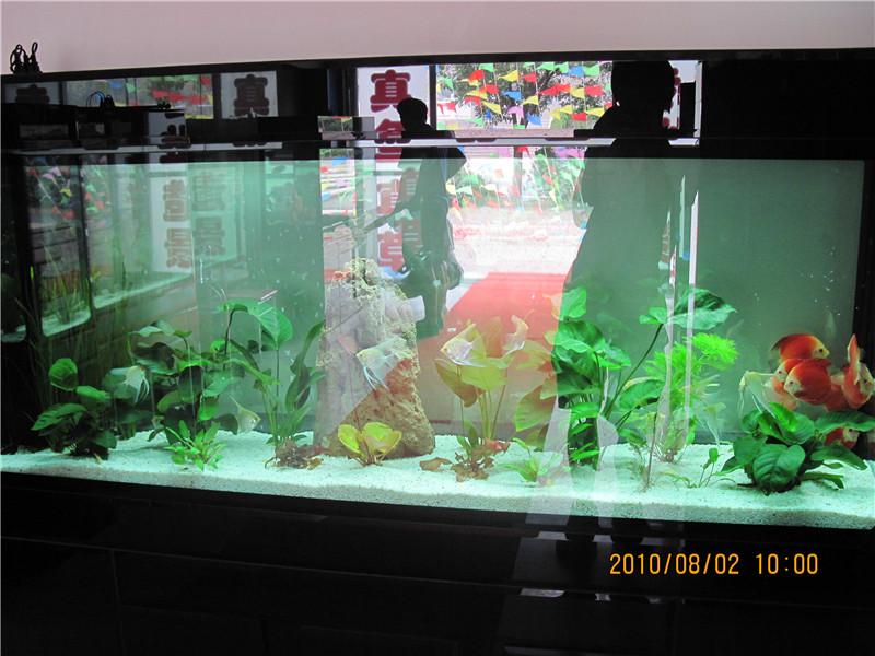 神木生态鱼缸销售部 高清图片