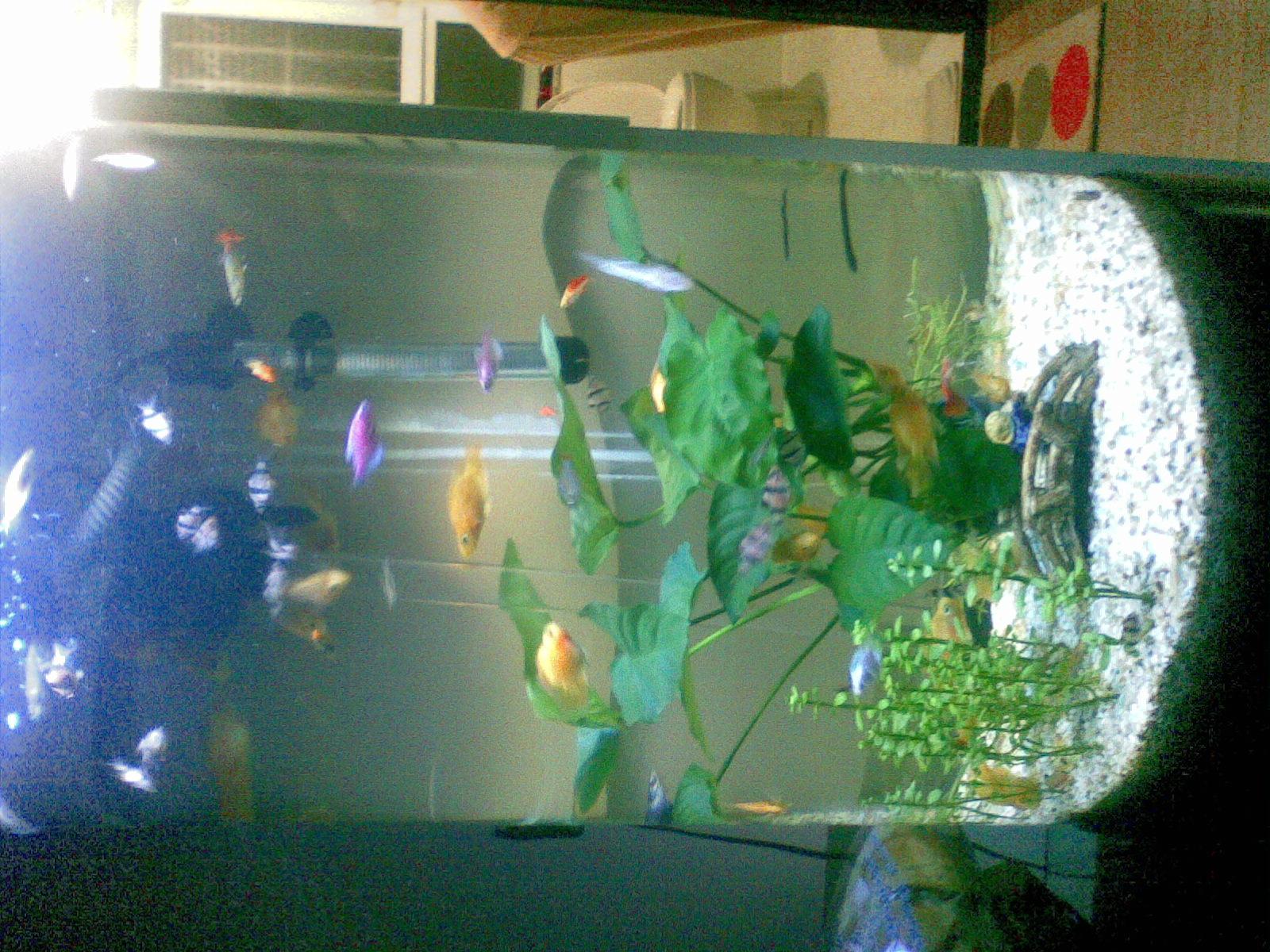 圆柱形鱼缸 出售