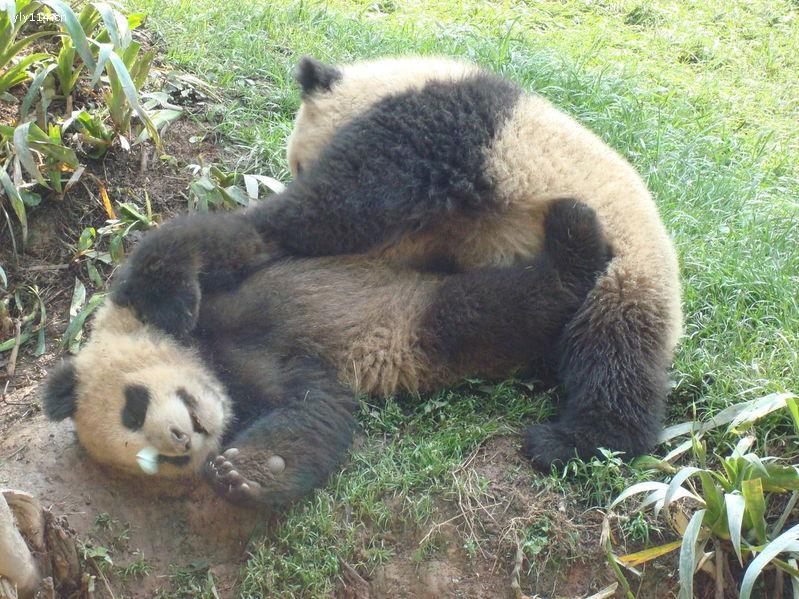 碧峰峡野生动物园二日游