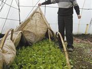 长春菜农难从涨价中获益 闲置大棚或另作他用