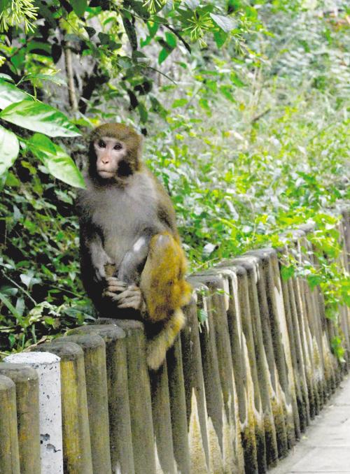 云南盐津保护动物种类