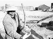 新疆两千年墓葬现世界最早假肢 小麦新鲜完好