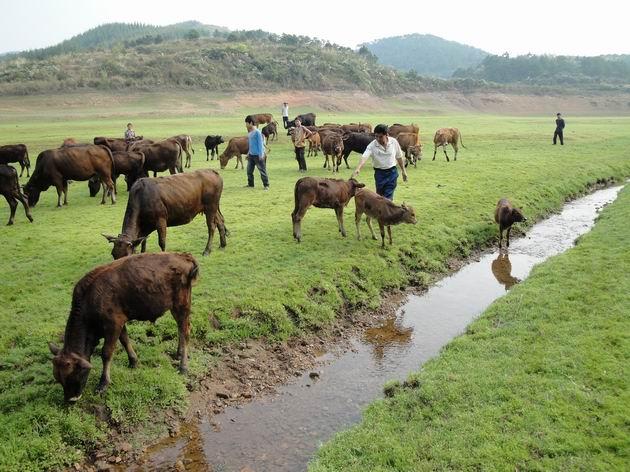 2016年云南省养殖业优惠政策,云南省畜牧发展扶持项目实施方案