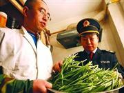 """青岛出现""""毒韭菜"""" 该市已有9人陆续中毒就医"""
