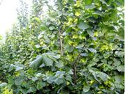 西丰县开展榛子产业开发培训活动