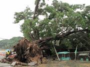 广州强暴雨致严重内涝 9亿城改被批效果不明显
