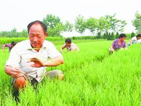 鄢陵普通农民成种植花卉苗木专业户