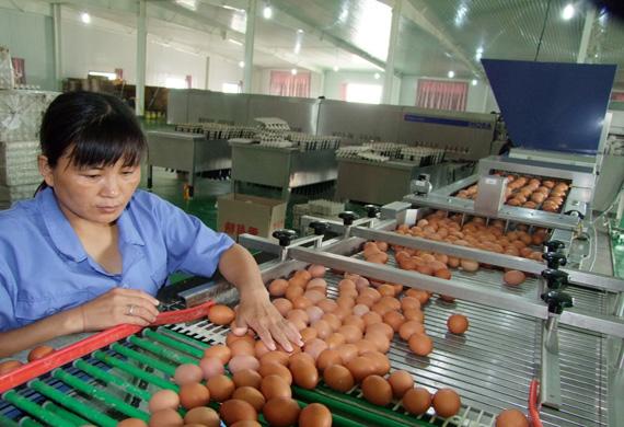 晋华鸡蛋畜产品有限公司