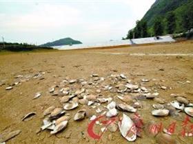 广东旱情蔓延 54万亩农田受旱4万群众饮水难
