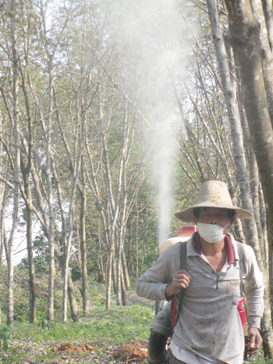 橡胶树喷药防病