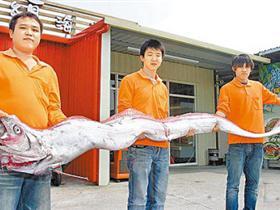 渔民在台湾近海捕获3.5米长深海皇带鱼(图)
