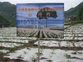 石棉�h中高山地膜玉米和地膜�R�薯�目通�^�收