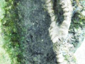 疑似巨型�游锘�石有待�<诣b定�L�_20米,位于荔波大七孔景�^