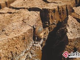 云南省气象台专家:4大原因致云南省持续干旱[图]