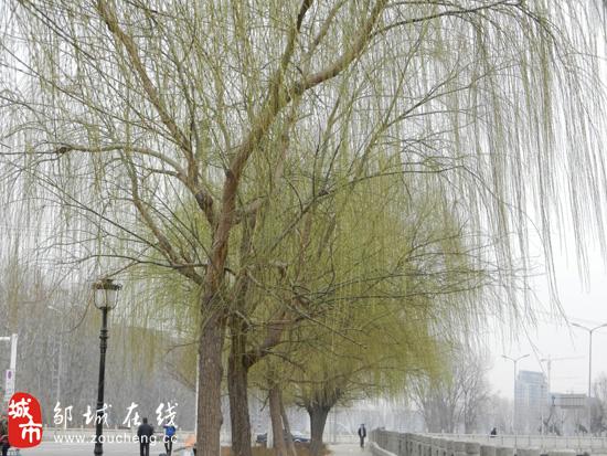邹城在线3月20日讯(实习记者 李中华)根据国家天文台出版的《中国天文年历》,今年春分准确时间为3月20日13时14分,春分时昼夜平分,太阳直射赤道,春暖花开,莺飞草长,万物回春。今年的春分对于这座位于山东省西南部的历史文化名城邹城来说,也算是有了一个不错的印记,上午灰蒙蒙的天气到了下午1点左右竟然开始转晴,不知道此时的阳光普照大地是因为春分而来还是春分因它而来呢?我们撇去这些庄周梦蝶、蝶梦庄周的故事不管,邹城的春天确实来了。记者在今日13时14分前后,用手中的相机记录下了春分前后的唯美瞬间。 镜头一:戏