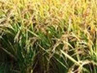 白城市盛通水稻育秧盘厂