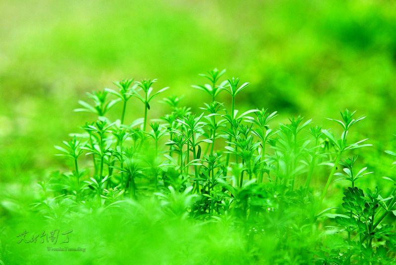 春花春草春风春雨的成语和诗句