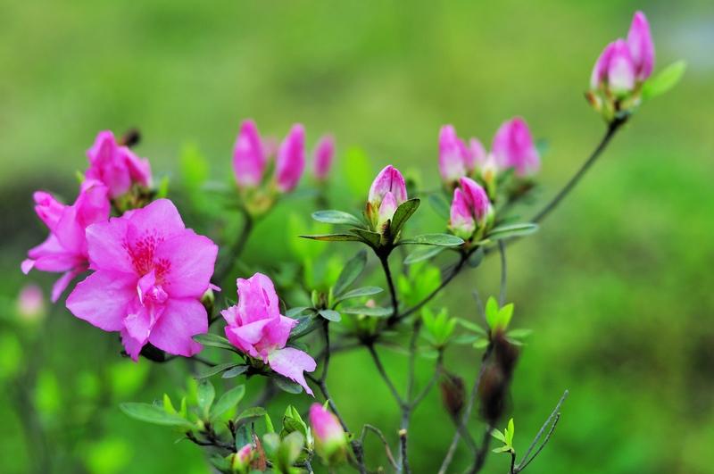 等到花也谢了_等到花儿也谢了 表情_等到花儿也谢了