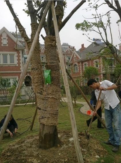 武汉私家花园造型树大树移栽_家居街_武汉在
