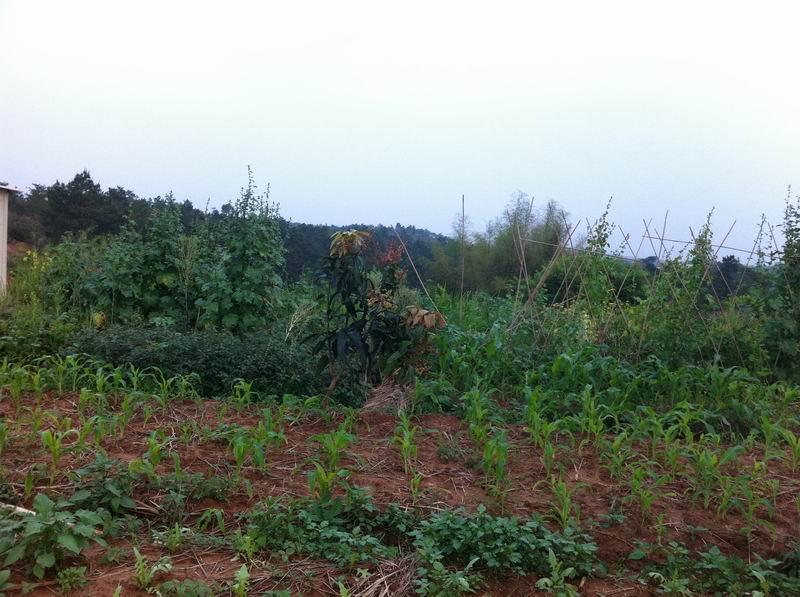 100亩农庄转让,鱼塘40亩菜地20亩山20亩
